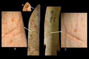 Neanderthal, kanibal, manusia purba