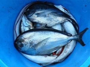 ikan, manfaat ikan, depresi, tips sehat