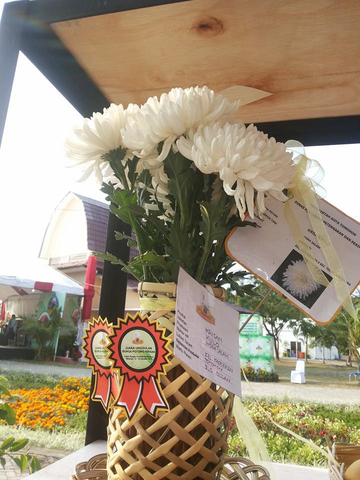 Krisan Kulo yang menjuarai Vestifal Hortikultura di Mataram
