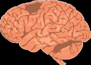 Otak Besar , IQ, kepandaian