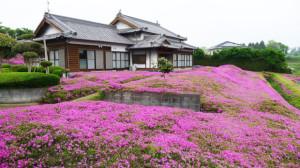 karpet bunga jepang