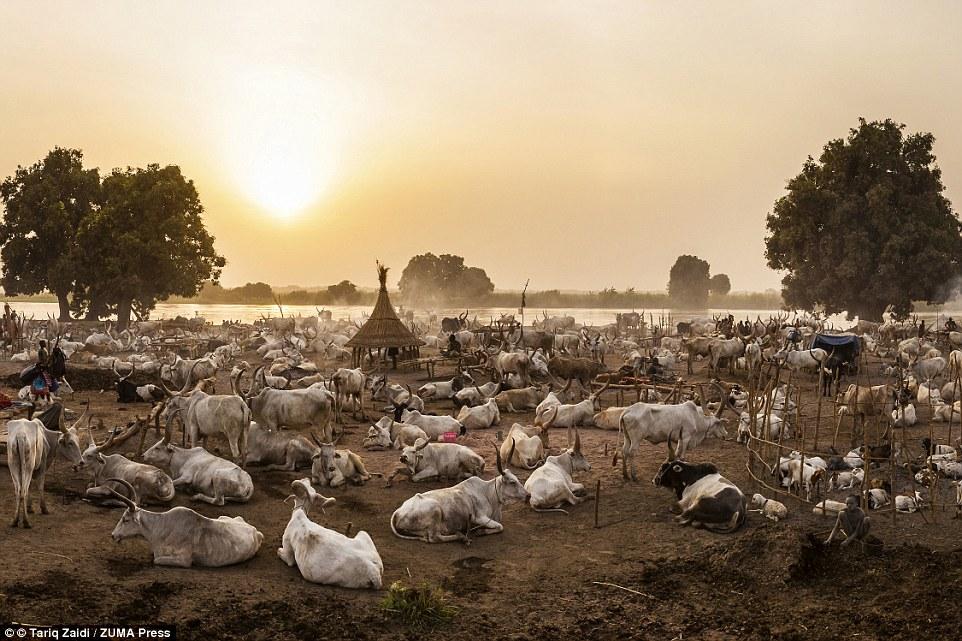 Suku Mundari, Sungai Nil , sudan selatan, sudan