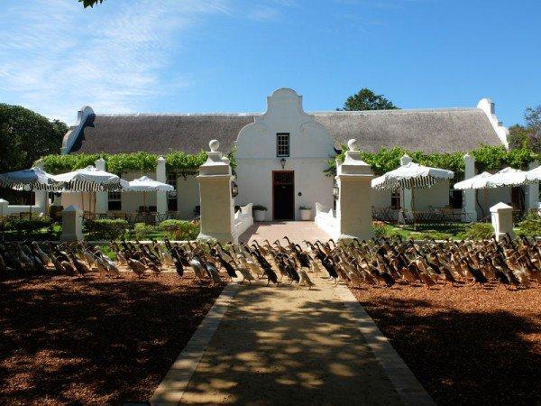 Bebek ,  Bebek Pelari India , Perkebunan Anggur, Vergenoegd Wine Estate,