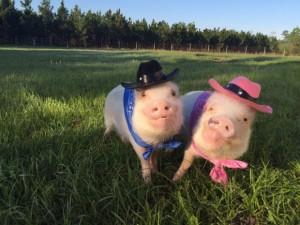 Temui Priscilla dan Poppleton, Pasangan Babi Paling Terkenal di Instagram