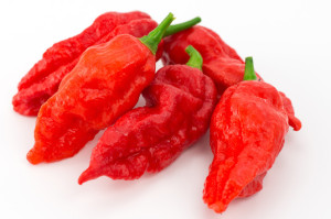 Cabai Setan, ghost pepper,