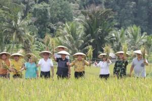 panen padi yang dilaksanakan di Kelurahan Woloan Dua Tomohon Barat