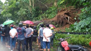 Petugas bersama masyarakat sementara menangani pohon tumbang menutupi jalan