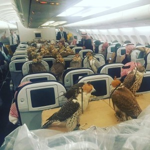 Qatar Airways, burung elang
