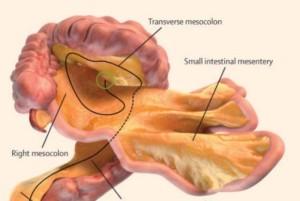 Ilmuan Temukan Mesenterium, Organ Tubuh Baru Manusia