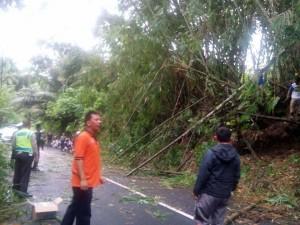 Penanganan pohon tumbang di salah satu wilayah di Kota Tomohon