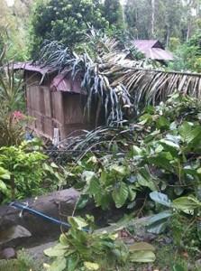 Angin Kencang dan Hujan Lebat Sejumlah Rumah Warga Minsel Tertimpa Pohon