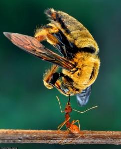 Foto Ini Menunjukkan Pada Anda Betapa Kuatnya Hewan Semut Itu