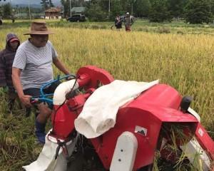 Gubernur Sulut Panen Padi Beras Merah di Perkebunan Pribadi