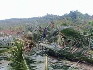 Bencana Minsel ,  Jalan Trans Sulawesi