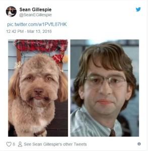 Anjing Berwajah Manusia, anjing  Shih Tzu, anjing aneh
