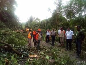 Sekretaris Kota Tomohon meninjau langsung pembersihan pohon di ruas Tomohon-Manado