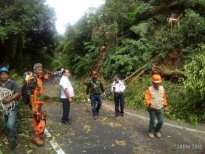 Sejumlah bagian sudah aman dari pohon tumbang