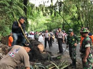 Kapollres Tomohon AKBP I Ketur Agus Kusmayadi SIK turun langsung di TKP pohon tumbang