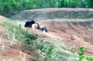 Sopir Taksi Meninggal Dunia Saat Ambil Foto Selfie Dengan Beruang
