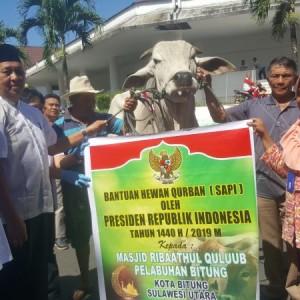 sapi kurban dari Presiden Jokowi
