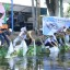 100 Ribu Ikan Tawas Ditebar di Danau Sineleyan Tomohon