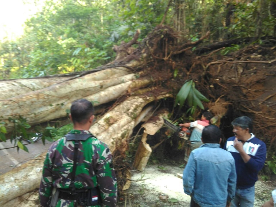 Pohon yang tumbang menutupi ruas jalan Woloan-Tara-tara