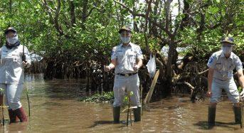 Dukung Pelestarian Lingkungan, Jasa Raharja Sulut Tanam 2.000 Bibit Mangrove di Bahowo